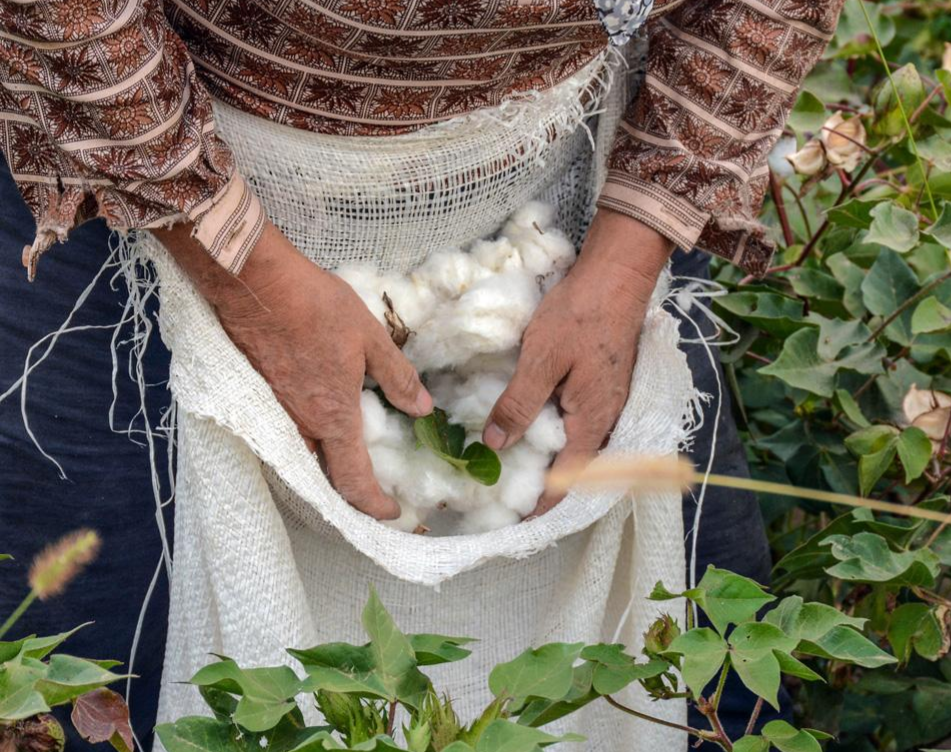 100% organická bavlna